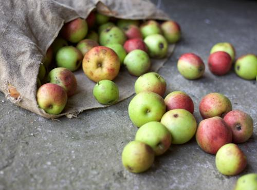 Cover photo showing apples for the APSRG's event on food waste and food loss