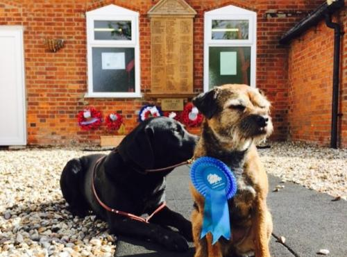 Two dogs wearing rosettes being cute